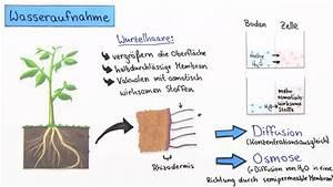 Stickstoffmangel Bei Pflanzen : n hrstoffversorgung bei pflanzen koh sion und adh sion ~ Lizthompson.info Haus und Dekorationen