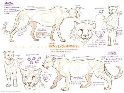 cat poses drawing stuff drawings animal drawings
