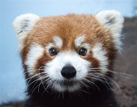 Birmingham Zoo Animal List