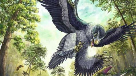 cretaceous birds survived mass extinction  eating seeds