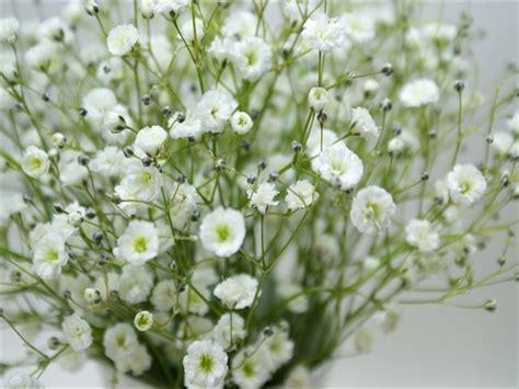 カスミソウ の 花 言葉