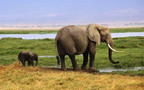 fondos de pantalla de elefantes wallpapers hd