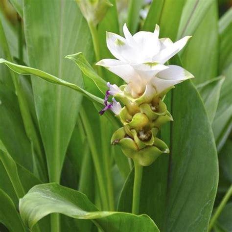 fleur vivace liste ooreka