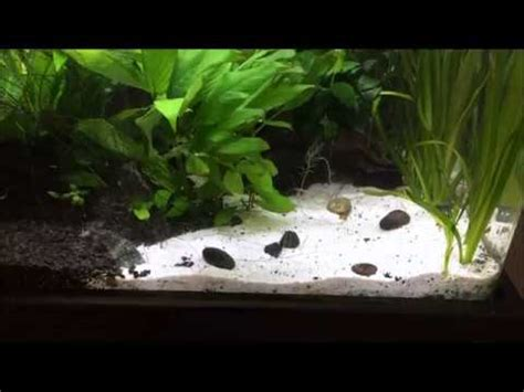 Aquascape Substrate by Maintaining Sand Substrate In An Aquascape