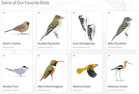 the modern birder s best field guides optics den