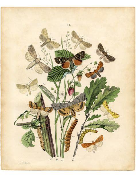 Printable Moth Wall Decor The Graphics Fairy