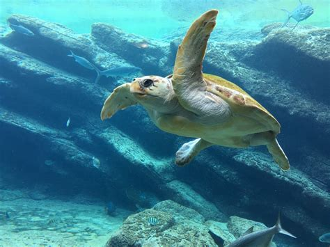 world turtle day celebrated