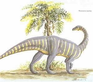 Riojasaurus | HowStuffWorks