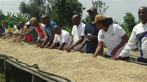 It's not one of africa's largest producing countries; Rwandan coffee farmers testify how the crop improved their ...