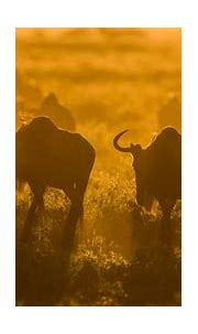 +255764415889 by WhatsApp | africanaturaltours2008@gmail ...