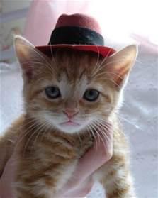 cat in a hat random hats