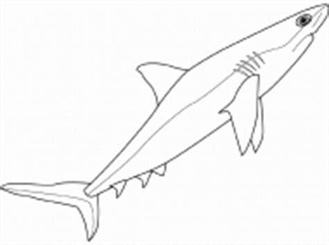 Mako Shark Coloring Page Democraciaejustica
