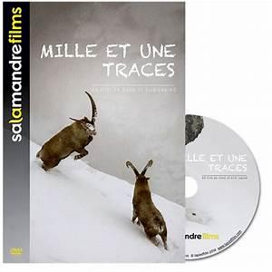 Mille Et Une Pile Catalogue : la for t du lynx la salamandre ~ Dailycaller-alerts.com Idées de Décoration