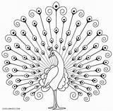 Peacock Coloring Pages Printable Drawing Birds Cool2bkids Indian Simple Peacocks Feather Line Craft Pic Feathers Sketch Drawings Outline Embroidery sketch template