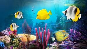 T?l?chargement gratuit de aquarium fond d ?cran anim?