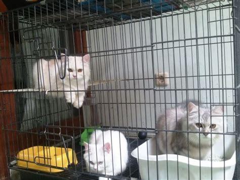 spesifikasi kandang kucing yang bagus okdogi