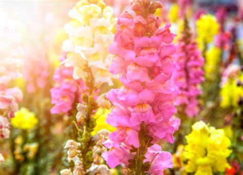 regalare fiori significato fiori da non regalare a chi si ama floraqueen italia