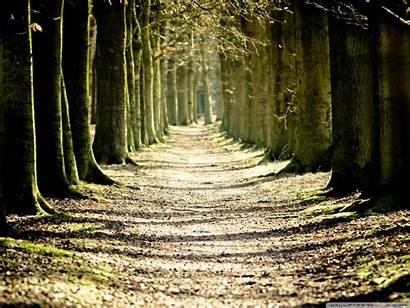 Tree Path Lined Standard Wallpaperswide