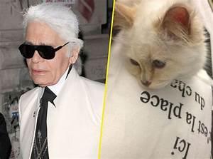 Choupette Chat Karl : karl lagerfeld son chat choupette baigne dans le luxe le plus complet ~ Medecine-chirurgie-esthetiques.com Avis de Voitures
