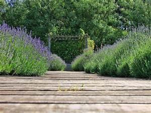 Rasen Düngen Bei Sonne : kostenlose foto landschaft baum natur gras bl hen pflanze sonne rasen stengel blume ~ Indierocktalk.com Haus und Dekorationen