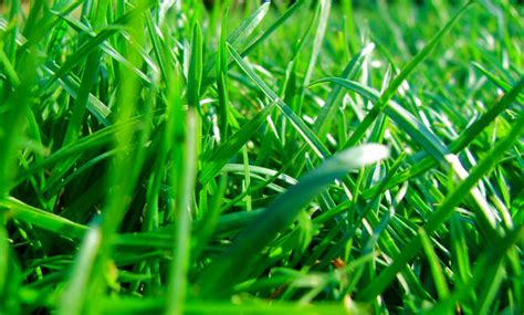 Wann Dünge Ich Meinen Rasen by Rasen D 252 Ngen Selbst De