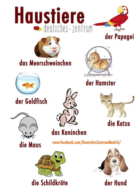 Haustiere Deutsch Wortschatz Daf German Vocabulario