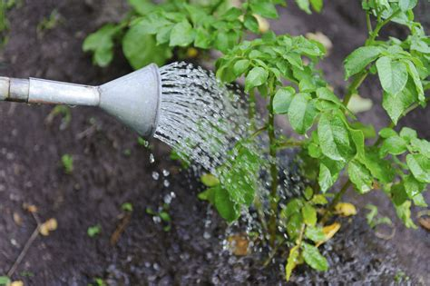 pictures of watering plants 5 tips for the every day gardener