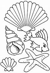 Coloring Pages Seashell Shells Sea Shell Beach Seashells Types Creature Printable Drawing Different Colouring Drawings Dibujo Colornimbus Creatures Para Getdrawings sketch template