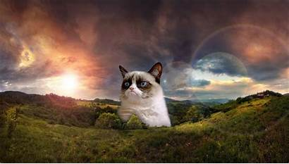 Grumpy Cat Funny Wallpapers Cats Background Quotes