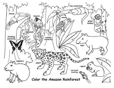 amazon rainforest amazon rainforest animals