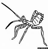 Bug Coloring Insect Clipart Assassin Assasin Pages Colouring Silverfish Clipground Template Number sketch template