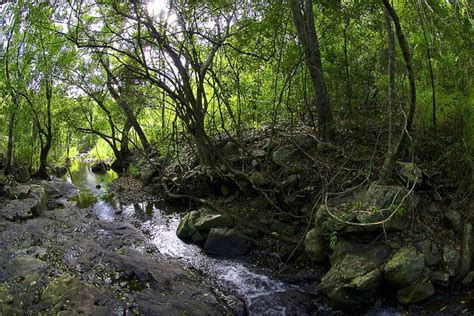 What Is A Rainforest? Features, Importance And Location Of