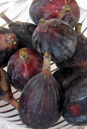 when are figs in season what s in season figs the city cook inc