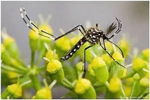Qu Est Ce Qui Attire Les Moustiques : moustiques on en sait plus sur les stimuli odorants qui ~ Voncanada.com Idées de Décoration