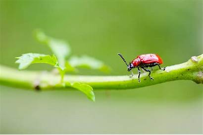Beetle Wallpapers Background 1356 2048