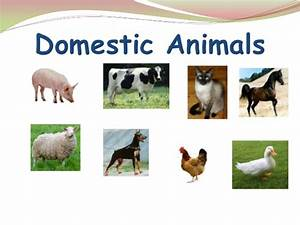 The gallery for --> Domestic Animals Images For Kids