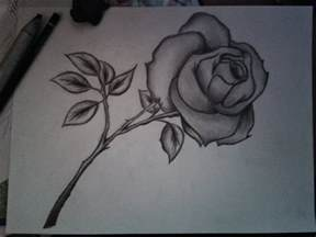 Flowers Drawing Pencil Sketches