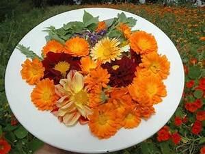 Welche Blumen Kann Man Essen : welche essbaren blumen kann ich jetzt zur dekoration von ~ Watch28wear.com Haus und Dekorationen