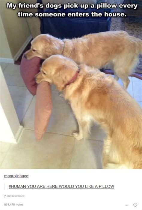 Funny Dog Tumblr