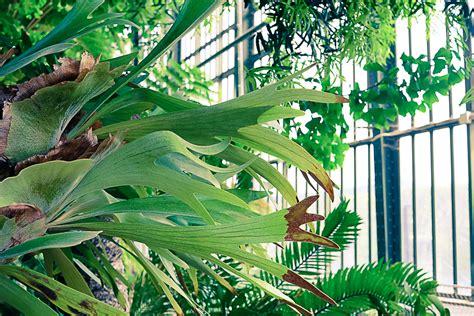 les grandes serres du jardin des plantes paris planb