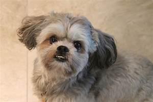 Anti Allergie Hund : hunde f r allergiker ~ Orissabook.com Haus und Dekorationen
