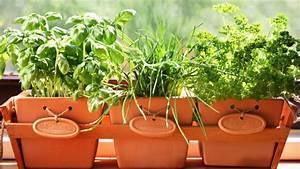 Welche Pflanzen Fürs Schlafzimmer : kr uter pflanzen und pflegen tipps f r k chenkr uter ~ Frokenaadalensverden.com Haus und Dekorationen