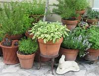 potted herb garden How to Grow a Container Herb Garden