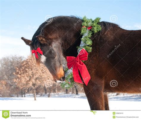 horse wearing  christmas wreath   bow stock