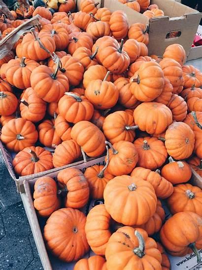 Pumpkin Aesthetic Fall Pumpkins Wallpapers Backgrounds Fallin