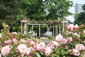 Haus Am Rosarium : rosenfest westfalenpark l dt ein nachrichten ~ Lizthompson.info Haus und Dekorationen