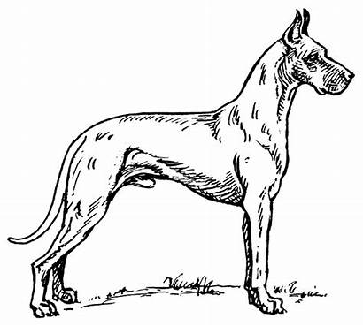 Dog Clipart Dane Drawing Terms Pages Coloring