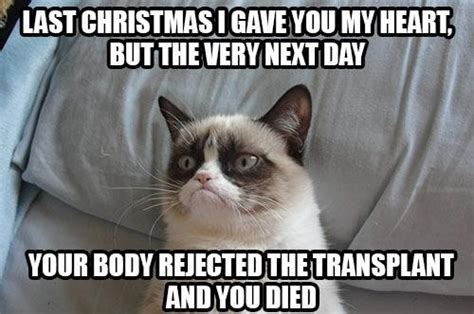 Mean Cat Memes - mean cat i love this angry cat pinterest