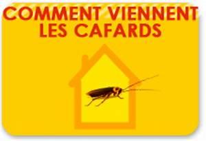 Comment Éliminer Les Cafards : anti cafard apprenons ensemble conna tre les cafards ~ Melissatoandfro.com Idées de Décoration
