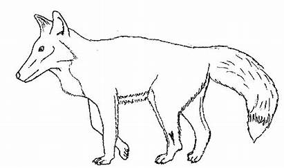 Fox Coloring Pages Printable Colouring Foxes Getcolorings